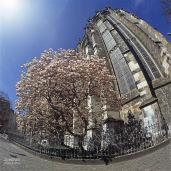 © JosWaS, Aachener Dom Aachen, Magnolienblüte, Chorhalle