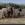 Het Werkend Trekpaard Zeeland | © JosWaS