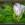 Sommerblüten am Wegrand | Dünenweg | Westerschelde - Zeeland | © JosWaS - Josef Walter Schumacher