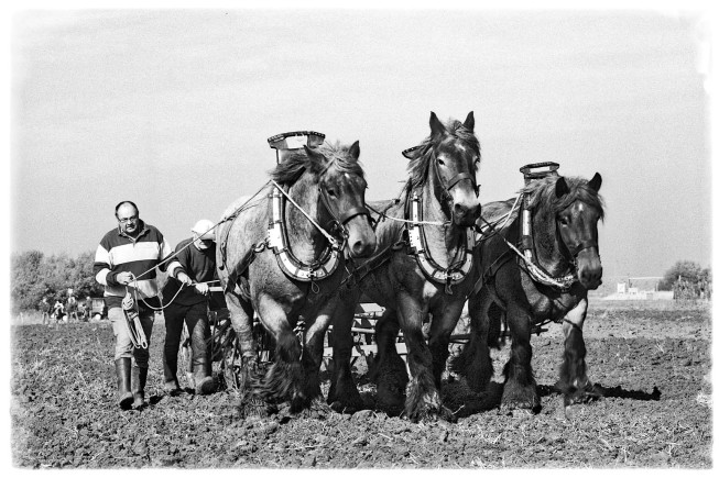 het werkend Trekpaard | © JosWaS